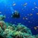 Tour Nha Trang scuba 4d